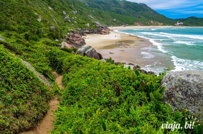 Trilha para a Praia da Galheta, point gay e de nudismo em Floripa