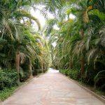 Turismo em Metrópole: Túnel de palmeiras na entrada de Inhotim - Foto: Clovis Casemiro