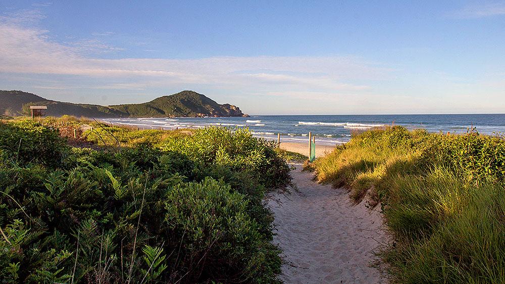 Área de preservação da Praia do Rosa, em Santa Catarina - Foto: Divulgação/Thay Andrade