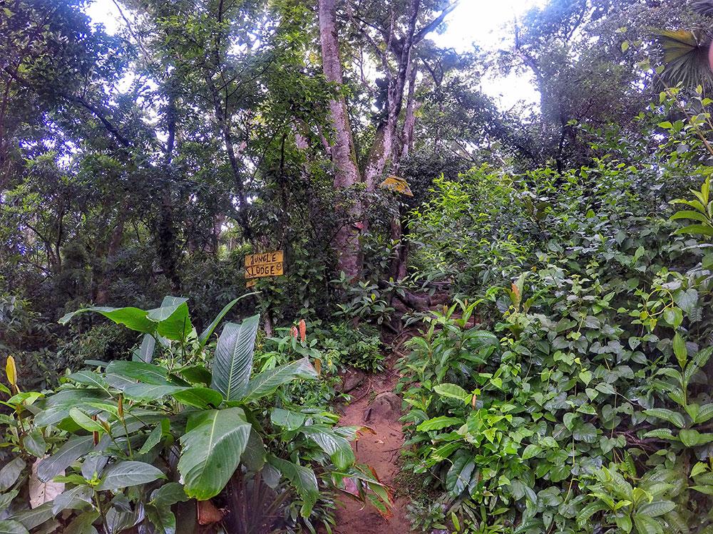 Aventura em Ilha Grande: Jungle Lodge ^^ - Foto: Jeff Slaid