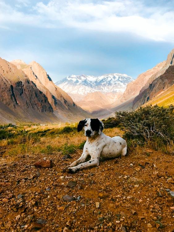 Cachorríneo descansando em Cajón del Maipo, no Chile - Foto Eduardo Gregori