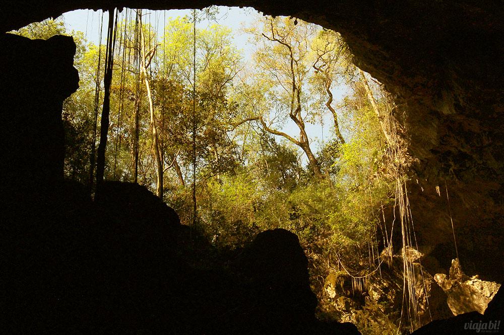 Resultado de imagem para arvore, gruta e tigre